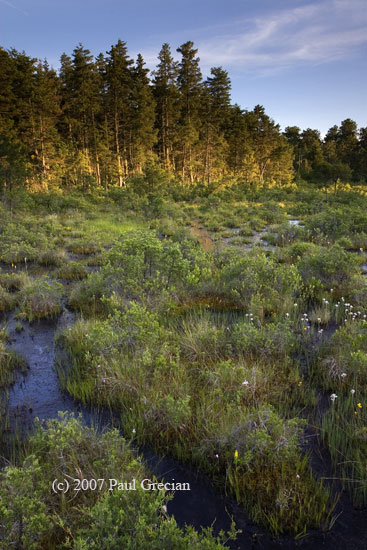 Pine Barrens (c) Paul Grecian