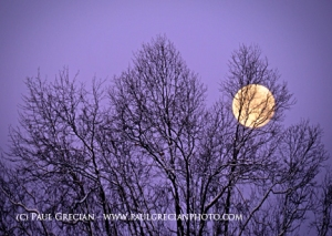 Moonset behind trees